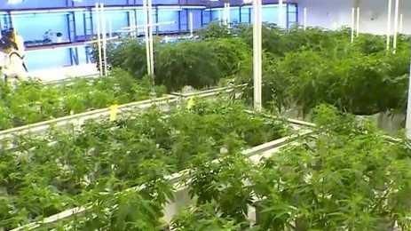Recreational marijuana bill passes the House