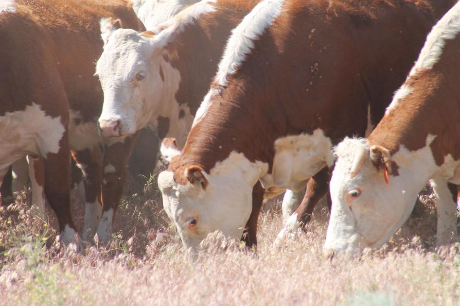 Washington farming groups are seeking changes to the livestock capital gains tax