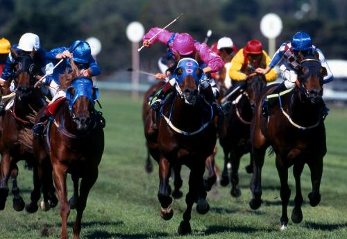 U.S. Equine Professionals Tax Issues